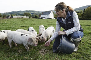 Guest blog When will pigs be treated as equals again