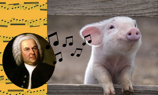 Bach = Happy Pig
